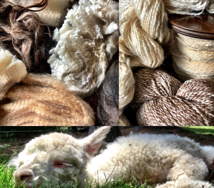Spinning Alpaca, Selecting and Spinning the Treasure of the Andes