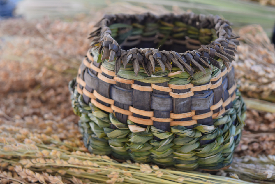 Wild Basketry: Twining and Twill With Cattails and Bark - SOLD OUT